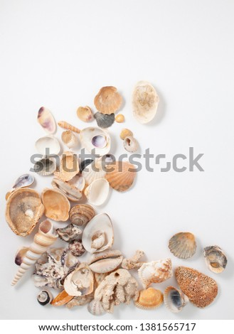Background image with sea shells of different types. Copy space text #1381565717