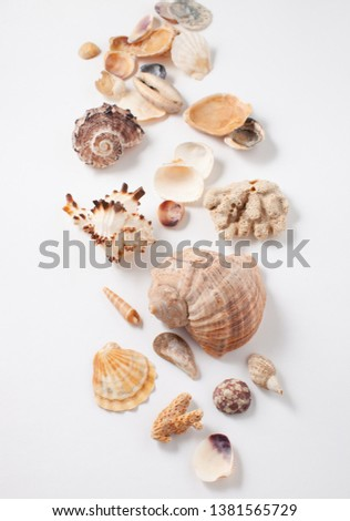 Background image with sea shells of different types. Copy space text #1381565729
