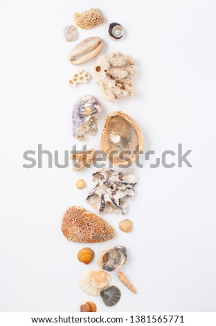 Background image with sea shells of different types. Copy space text #1381565771