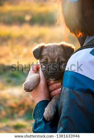 cute puppy, girl with a puppy, baby and puppy sleeping puppy #1381633946