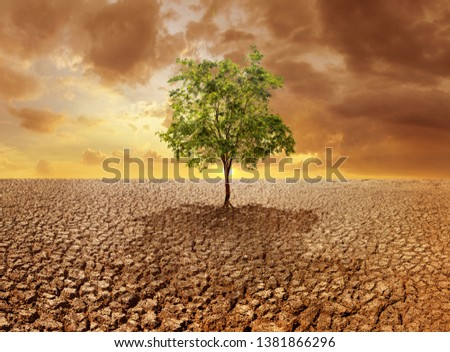 Lonely tree in dry wasteland a concept for global warming #1381866296