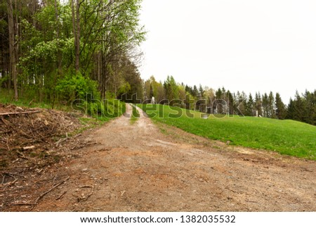 Road in a beautiful forest in the morning #1382035532