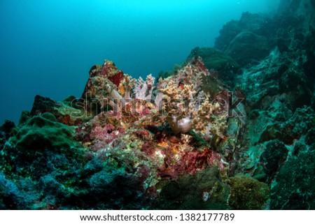 Broccoli coral, Litophyton arboreum with other hard corals in tropical water #1382177789
