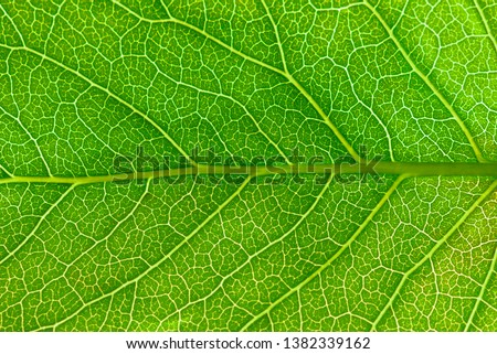 Close up leaf.  Macro photography. Royalty-Free Stock Photo #1382339162