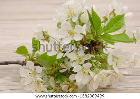 Cherry flowers in spring, selective photo and wood background #1382389499