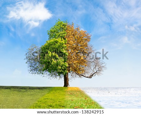 Four seasons tree time passing concept Royalty-Free Stock Photo #138242915