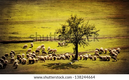 pastoral antique farmland background with sheep goat and several dogs