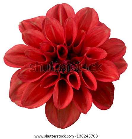 Red isolated flower #138245708