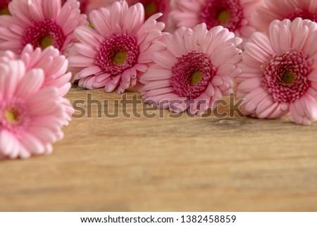 Pink Gerbera for greeting card #1382458859