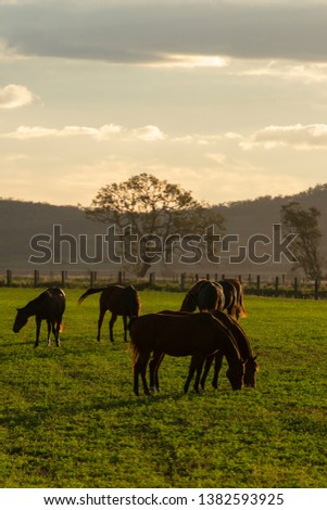 Horse in a countryside paddock during the day #1382593925