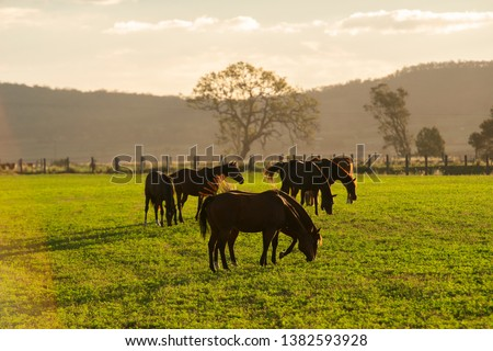 Horse in a countryside paddock during the day #1382593928