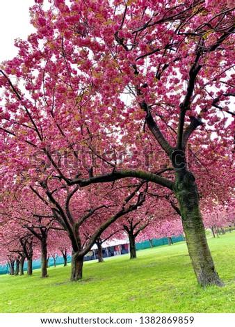 New York City/USA - April 26, 2019: Brooklyn Botanic Garden, NYC. #1382869859