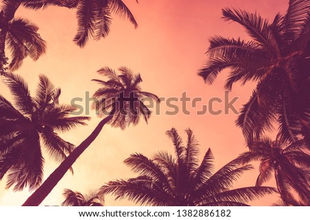 Summer vacation and nature travel adventure concept. Tropical palm tree with colorful bokeh sun light on sunset sky cloud abstract background. Vintage tone filter effect color style.