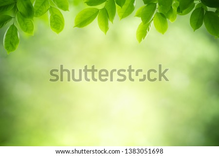 Closeup nature view of green leaf on blurred greenery background in garden with copy space for text using as summer background natural green plants landscape, ecology, fresh wallpaper concept. #1383051698