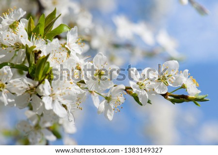 lovely early spring flowers tree #1383149327