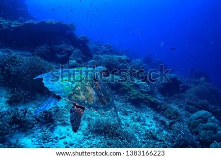sea turtle underwater / exotic nature sea animal underwater turtle #1383166223