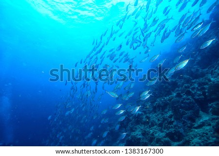 scad jamb under water / sea ecosystem, large school of fish on a blue background, abstract fish alive #1383167300