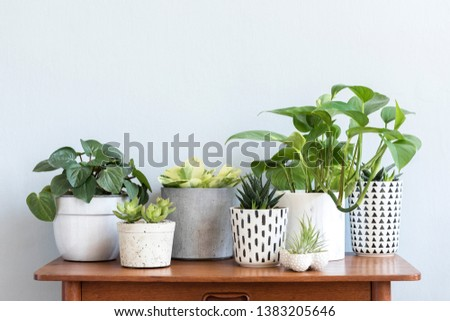 Stylish scandinavian interior with design commode and beautiful composition of plants in different hipster pots. Modern home decor. Gray background wall. Minimalistic concept. Template. Home garden. #1383205646