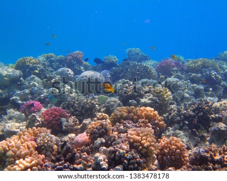 coral reef in egypt as nice natural landscape #1383478178