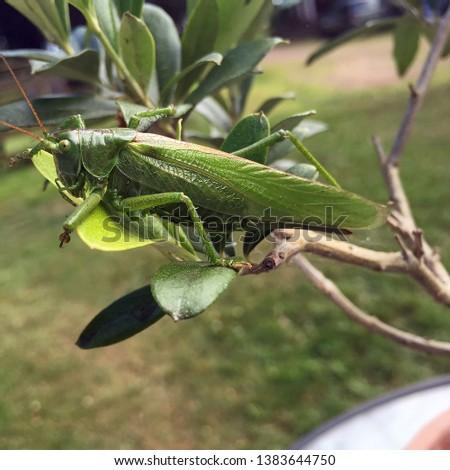 Bush cricket on a leaf in a garden #1383644750