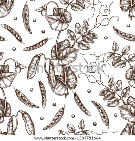 Hand drawn Pea background. Agricultural legumes plant drawing with beans, leaves and flowers. Vegan and healthy food. Botanical seamless pattern. Lineart. Vector pea outlines.  Royalty-Free Stock Photo #1383781664
