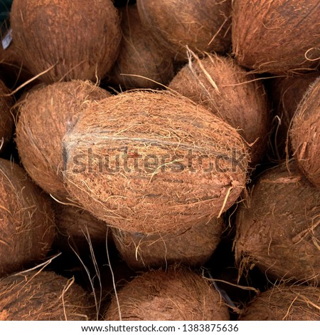 Macro photo of tropical fruit coconut. Texture hairy nuts coconut fruit. Coconuts in the shell. #1383875636