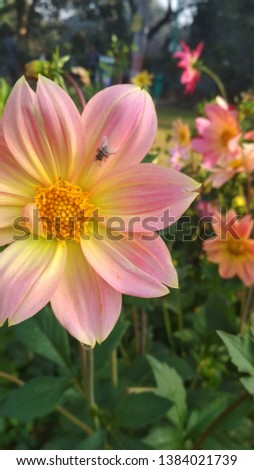 it's a flower pic. A bee is also there on the flower and seems to be good. The fresh flowers make us feel active and fresh.