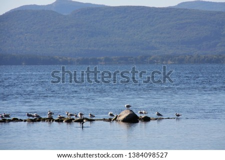 Seagulls perched on small rocks in blue lake with tall mountains in the background. #1384098527