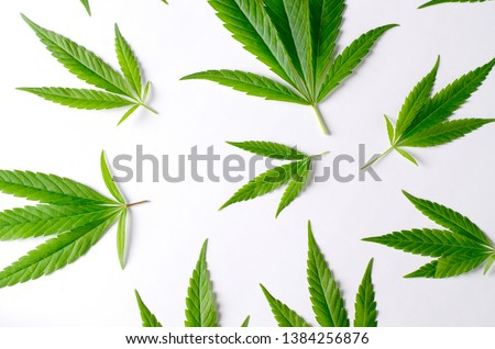 Cannabis Leaves on white background. Top view concept