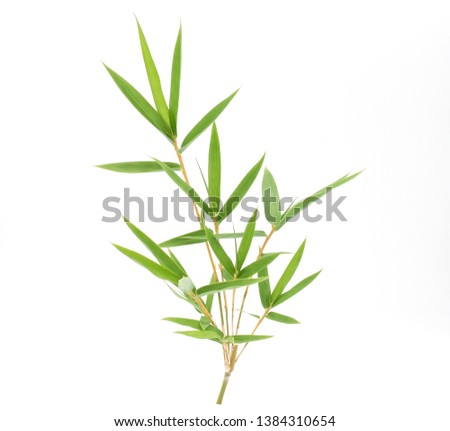 Branch and Bamboo leaf isolated on white background, Bamboo leaf texture as background or wallpaper, Chinese bamboo leaf, Closeup green branch and bamboo leaves  #1384310654