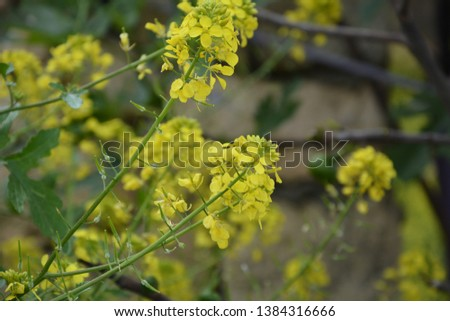 yellow flowers close up,yellow flowers and green leaves #1384316666