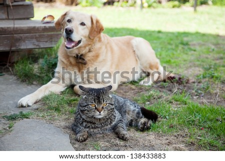 gray cat in the garden on a background of dog #138433883