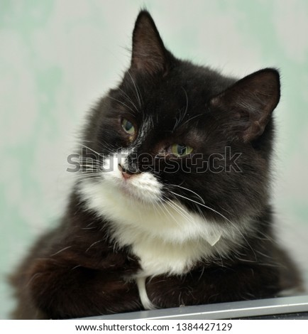 black and white cat portrait #1384427129