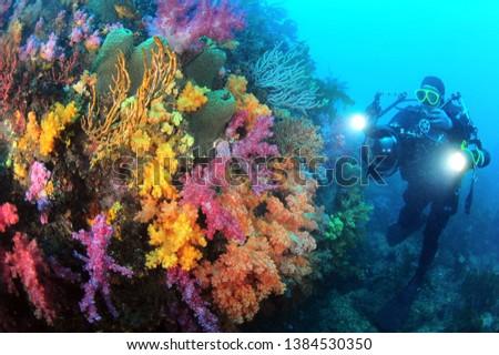 Underwater scenery of Jeju Island Moon Island, the best diving point in Korea. #1384530350