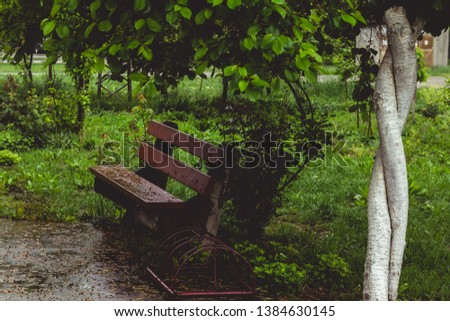 Sitting bench under the tree on rainy day, with garden in background.