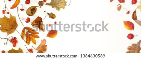 Autumn layout composition frame of dry leaves of twigs and berries on white background, Flat lay, top view, copy space, fall concept. #1384630589
