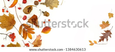 Autumn layout composition frame of dry leaves of twigs and berries on white background, Flat lay, top view, copy space, fall concept. #1384630613