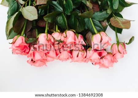 Coral pink rose flower at white textured background. Copy space for text #1384692308