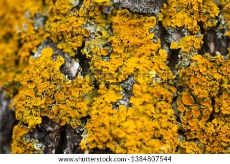 texture of yellow mushrooms on a tree macro #1384807544