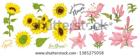 Sunflower flower and lily flower isolated, vector illustration. Vector set of blooming floral.Hand drawn Flower isolated on white background. #1385275058