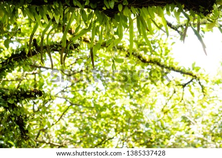 view of green leaf on blurred greenery background in garden and beauty bokeh. #1385337428
