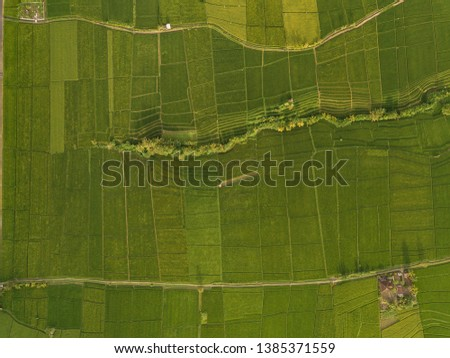 Aerial view of rice fields at day time,Bali,Indonesia #1385371559