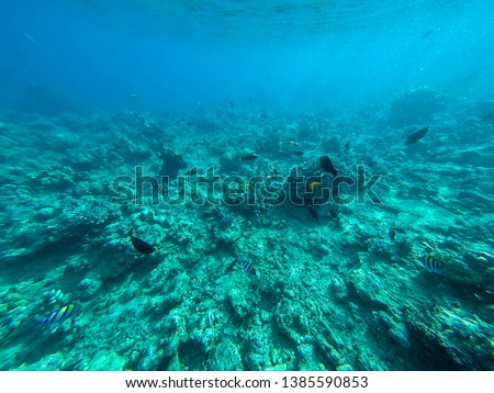 When the fish hord is looking for food under the sun in the shallow sea #1385590853
