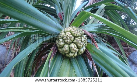 Tropical fruit on a tropical beach with tropical trees #1385725211