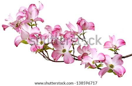 spring flowering branch #138596717