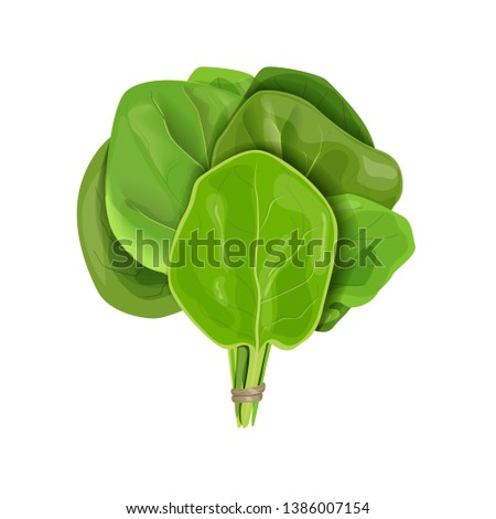 Bunch of Spinach fresh juicy raw leaves close up isolated on white. Healthy diet, vegetarian food, Sheaf #1386007154