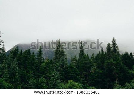 Evergreen Trees Scenic Background in Juneau Alaska #1386036407