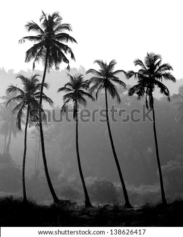 Black and white photo of palm trees silhouette, India