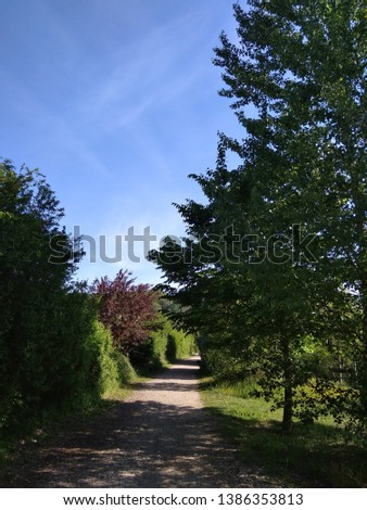 a wonderful green landscape with tree #1386353813