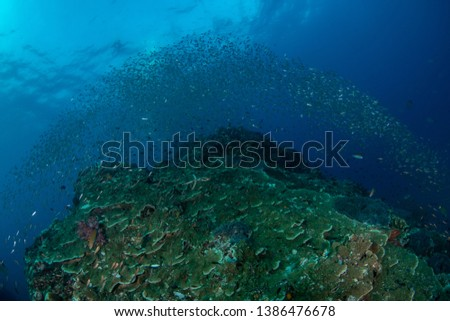 Tropical coral reef covered with Glassfish  #1386476678